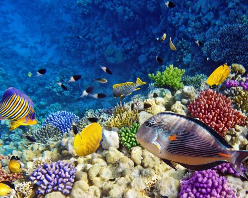 Diving-Red-Sea-yemen