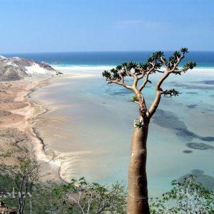Socotra 2