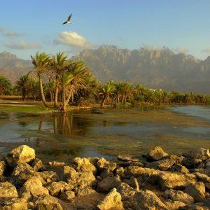Socotra Beach 8
