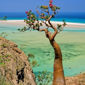 socotra-island-yemen-beach-lagoon-bottle-tree-qalansia-backgrounds-wallpaper-travel-162674