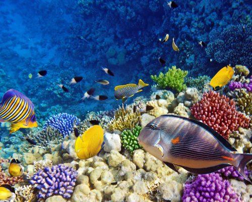 Diving-Red-Sea-yemen