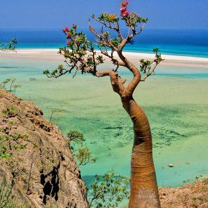 Socotra Beach 7